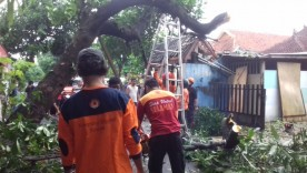 Pohon Tumbang di Wilayah RW 06 Kelurahan Kadipaten